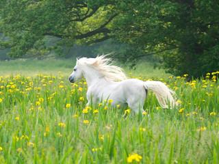 Beutiful Horse Running