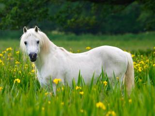 Beutiful Horse