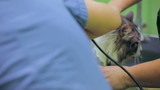 Veterinarian shaving a cat. Close-up