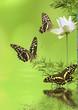 décor aquatique relaxant : lotus, papillons, bambou