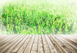 Green background of football field grass texture and wood floor