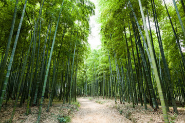 Bamboo forest © 06photo