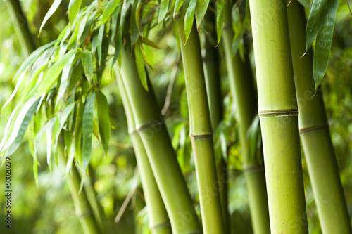 Plexiglas China Bamboo forest background