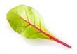 Leaf of salad isolated on white. Chard
