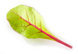 Leaf of salad isolated on white. Chard