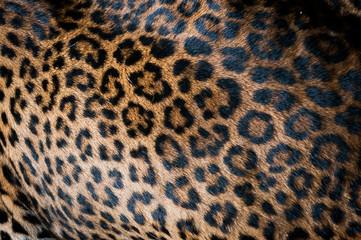 Pelage de léopard