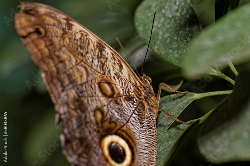 Macro photograph of a butterfly