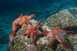 sea stars in a reef colorful underwater landscape