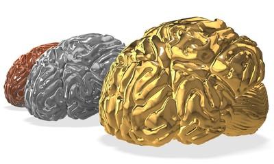 3d brain competition.