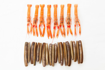 Group of fresh Norway Lobsters and Razor Shells. White backgroun