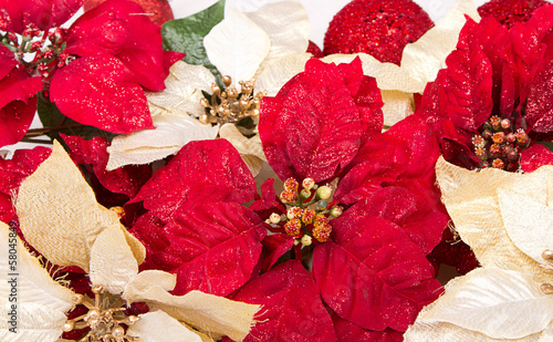 Group of Poinsettias