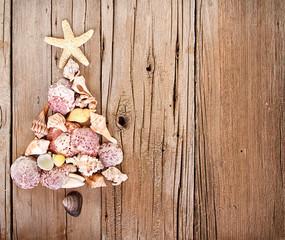 Sea shells shaped as a Christmas tree