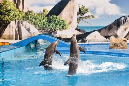 Leinwandbild Motiv Delfinshow