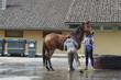 cheval a la douche