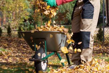 Wheelbarrow full of leaves