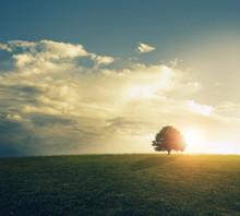 Zachód słońca w polu trawiasta.