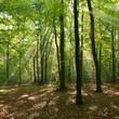 Fototapeten,wald,baum,landschaft,woodland