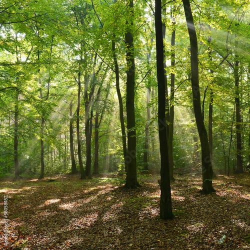 Fototapeten,wald,landschaft,woodland,szene