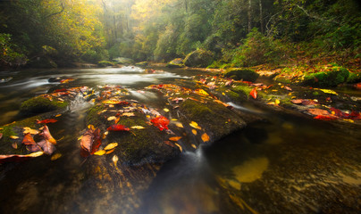 Fall Colors on Appalachian River