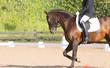 Obrazy na płótnie, fototapety, zdjęcia, fotoobrazy drukowane : Spanish Horse