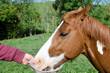 Man feeding his horse.