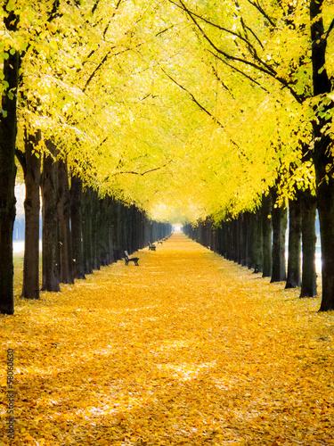 Plakat Georgengarten im Herbst