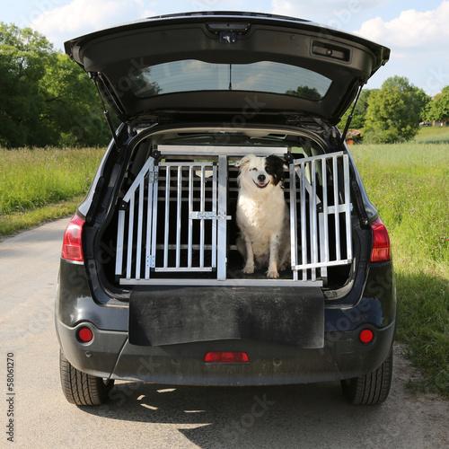 canvas print picture Hund in einem Auto auf Reisen