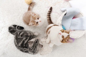 Cats with balls of yarn on the carpet