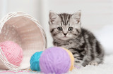 Kitten in a basket with balls of yarn - 58065478