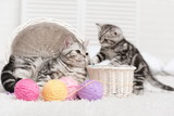 Two cats in a basket with balls of yarn - 58065486