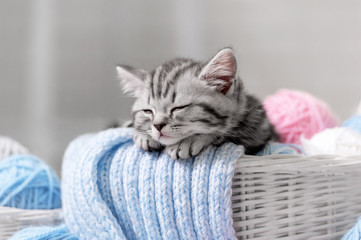 Kitten in a basket with balls of yarn