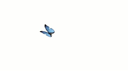 Butterfly animation. Loop.