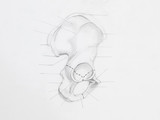 Detail of hip bone pencil drawing on white paper