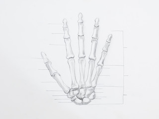 Detail of hand bones pencil drawing on white paper