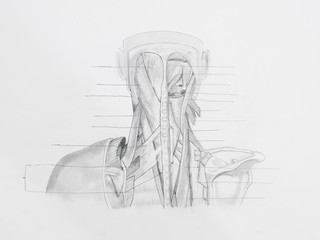 Detail of neck back muscles pencil drawing on white paper