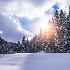 schneelandschaft mit sonnenschein