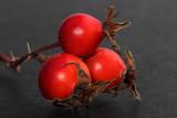 Berries of dog rose on black. Close up
