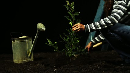 Tree Planting Isolated Black Background HD