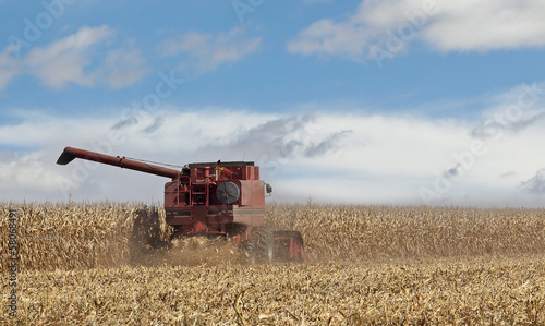 Picking Corn Crop