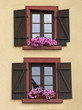 Windows with shutters and flowers.