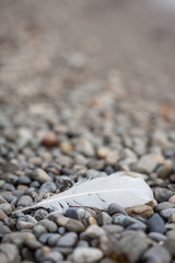 feather on stone beach