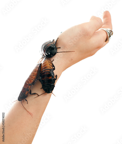 cockroach on a female hand
