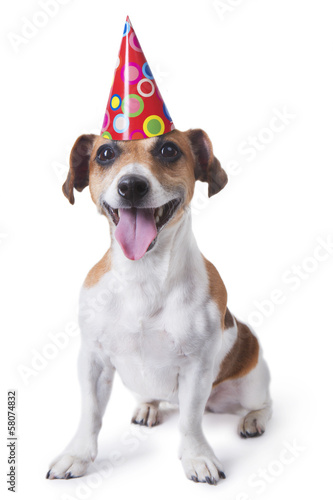 Cute dog in red party hat