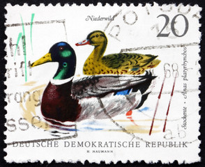 Postage stamp GDR 1968 Mallards, Bird