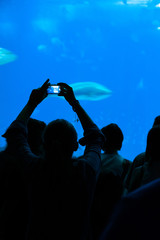 Person taking a photograph to the fishes in aquarium.