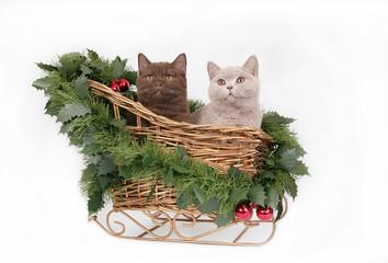 Kittens in Christmas sleigh.