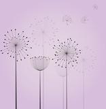 Dandelion flowers - 58082465
