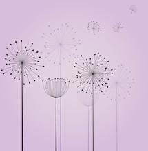 fleurs pissenlit