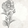 Monochrome seamless  background with roses.