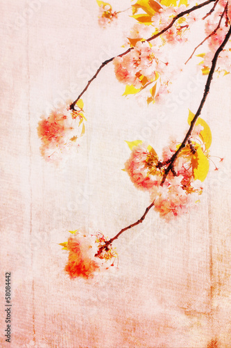 Grungy background with cherry blossom